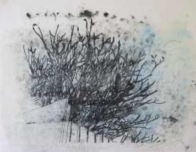 Winter frangipani _monoprint on rice paper 34 x 40 cm